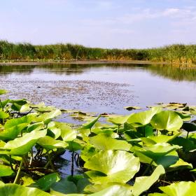 excursie-delta-dunarii-chisinau